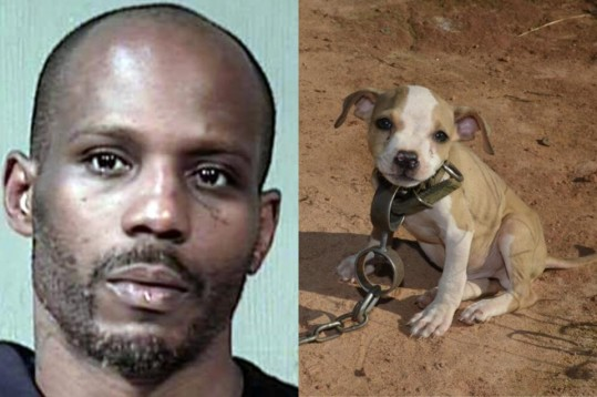 DMX-arrested-pit-bull-fighting